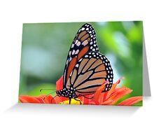 Fleur A l'Orange Greeting Card