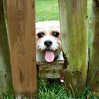 Peek-a-boo! by Nicole Remolde
