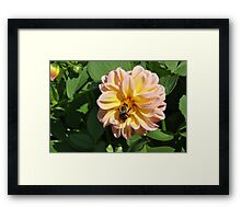 Bumble Bee in Flower Framed Print