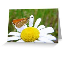 Red butterfly on the flower Greeting Card