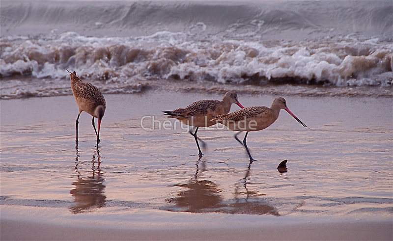 Walk This Way by Cheryl  Lunde