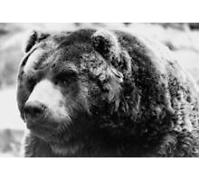Not Your Average Teddy Bear  Photographic Print