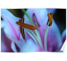 Stargazer Lily relaxing Poster
