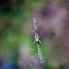 Oh What a Tangled Web We Weave... by Blaze66