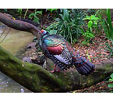 Colorful Bird  226 Views Photographic Print