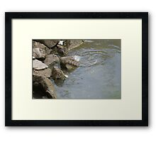 Lunch--Reptile Style Framed Print