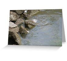 Lunch--Reptile Style Greeting Card