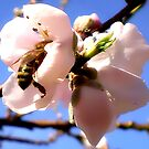 Beeing  Busy #1 by Jhanine Love