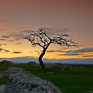 Lonely Tree by RichardIsik