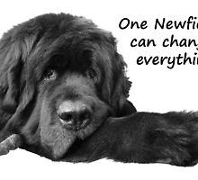 One Newfie Can Change Everything! by Newfiemom