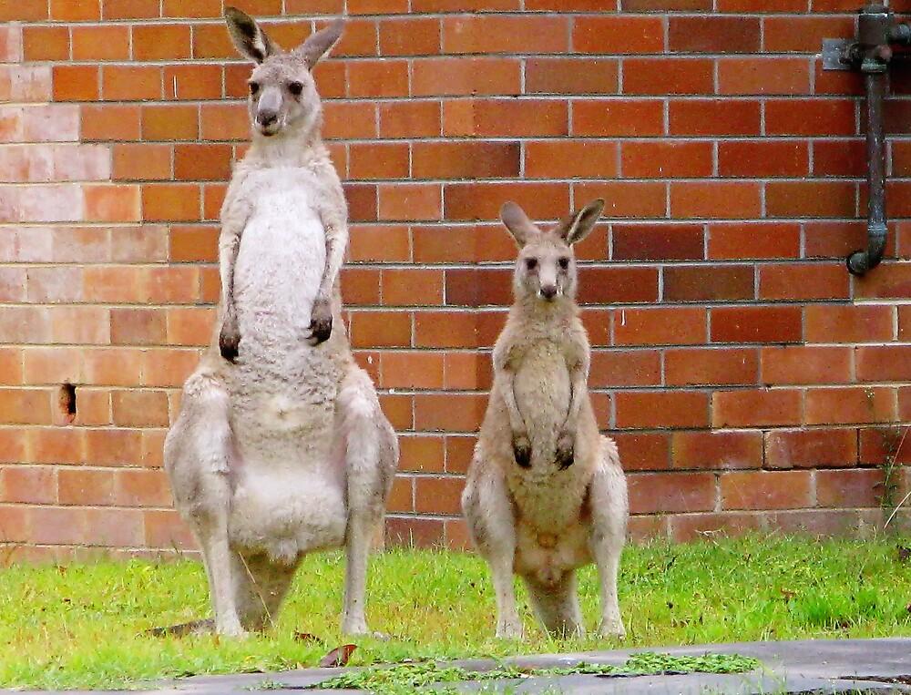 Two curious kangaroos by TheSpaniard