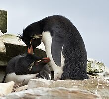 "Rockhopper Penguins ~ ""Love Is"" by Robert Elliott"
