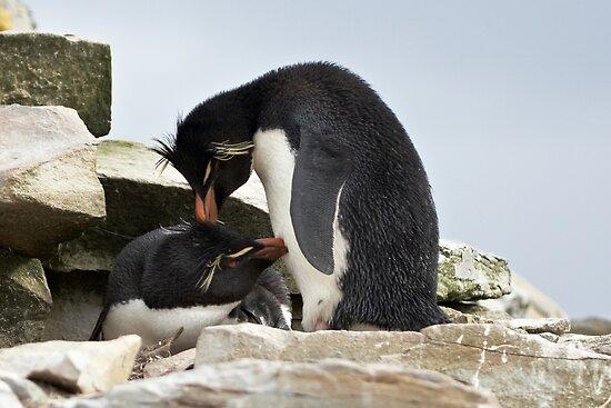 """Rockhopper Penguins ~ """"Love Is"""" by Robert Elliott"""