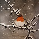 Winter Robin by Philip Holley