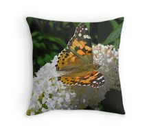 Painted Lady butterfly (Vanessa cardui) on white butterfly bush (buddleia) (2) Throw Pillow