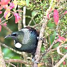 Are You Singing The Chorus -Tui - NZ by AndreaEL