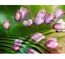 Remember the Spring Photographic Print