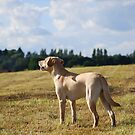 Izzy in the field by faithimages