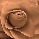 Tender Rose by Kate Towers IPA