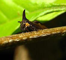 Horned Treehopper by Vanessa Barklay