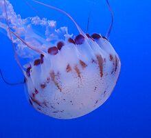 White and Purple JellyFish by Linda Scott