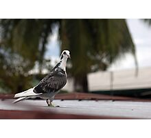 Pigeon Portrait Photographic Print