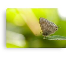 Hairy Lined Blue Canvas Print