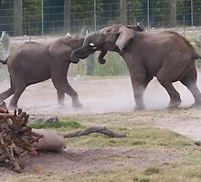 Elephant Tussle by AndsonHarrison