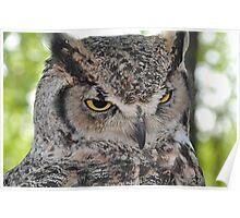 Bodacious Great Horn Owl  Poster