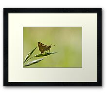 Perched on a grass seed Framed Print