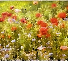 Poppy Field by Jessica Jenney