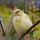 canary by brucemlong