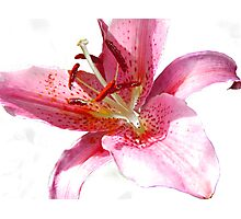 Pink Lily in watercolour Photographic Print