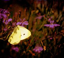 little butterfly by Yvonne Müller