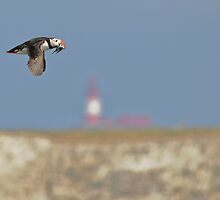 The Puffin & The Lighthouse by WhartonWizard