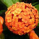 Orange Bubble of Flowers by Angel-L