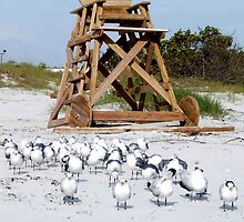Cape Canaveral lifeguard chair by Brenda Dow