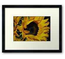 Sunflower Portrait Framed Print