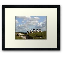 Inquisitive Sheep Framed Print