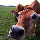 Teasy Cow by magneta