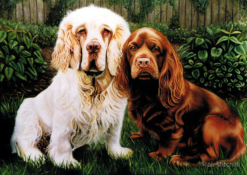 Spaniels by Rob Mitchell