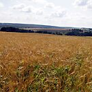 Field of Gold by magneta