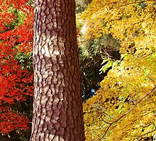 Autumn Colours, Peak District, Derbyshire by WaterGardens