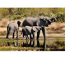Like mother like daughter - Okavango Delta Photographic Print