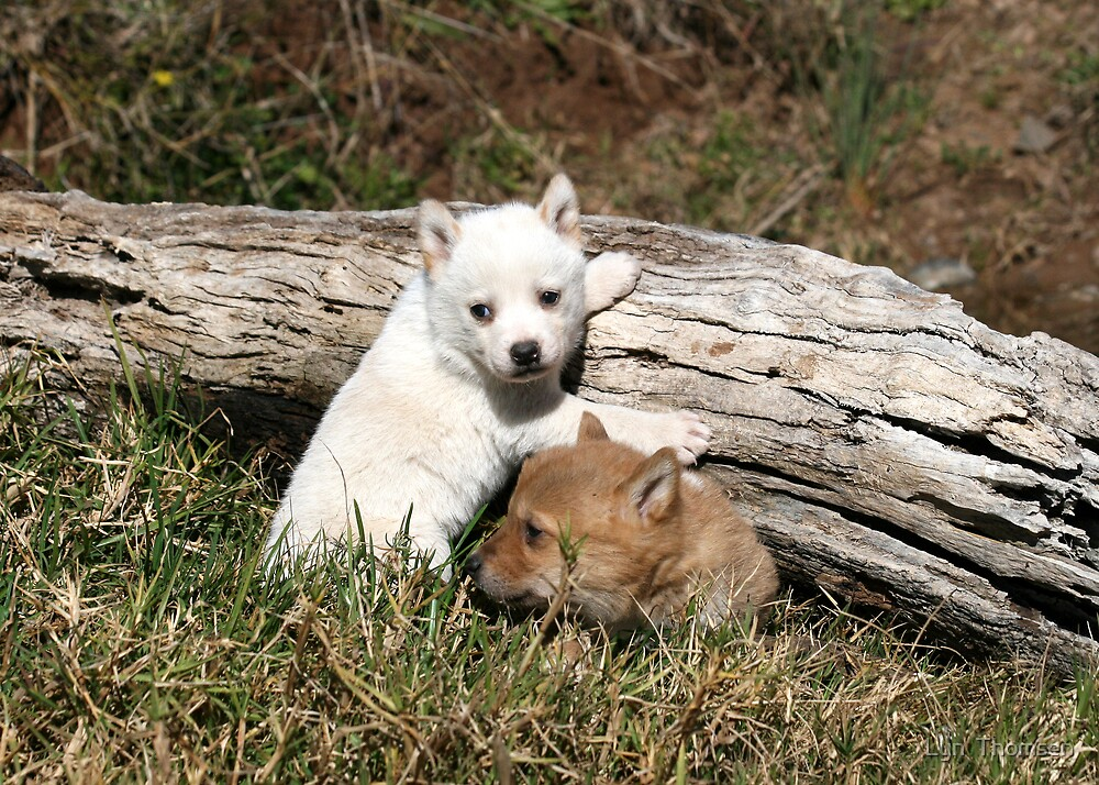 dingo pups  # 4 by Lyn  Thomsen
