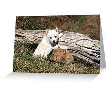 dingo pups  # 4 Greeting Card
