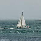 Regatta - Sailing Into the Wind - Golfe du Morbihan - France by Buckwhite
