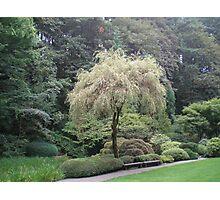 Japanese Gardens Photographic Print