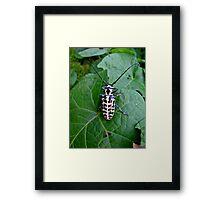 HUGE bug Framed Print
