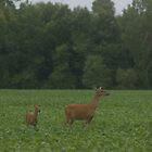 Doe and Fawn by Karl Tatgenhorst